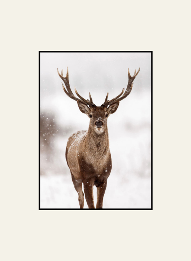 Posterstore Red Stag