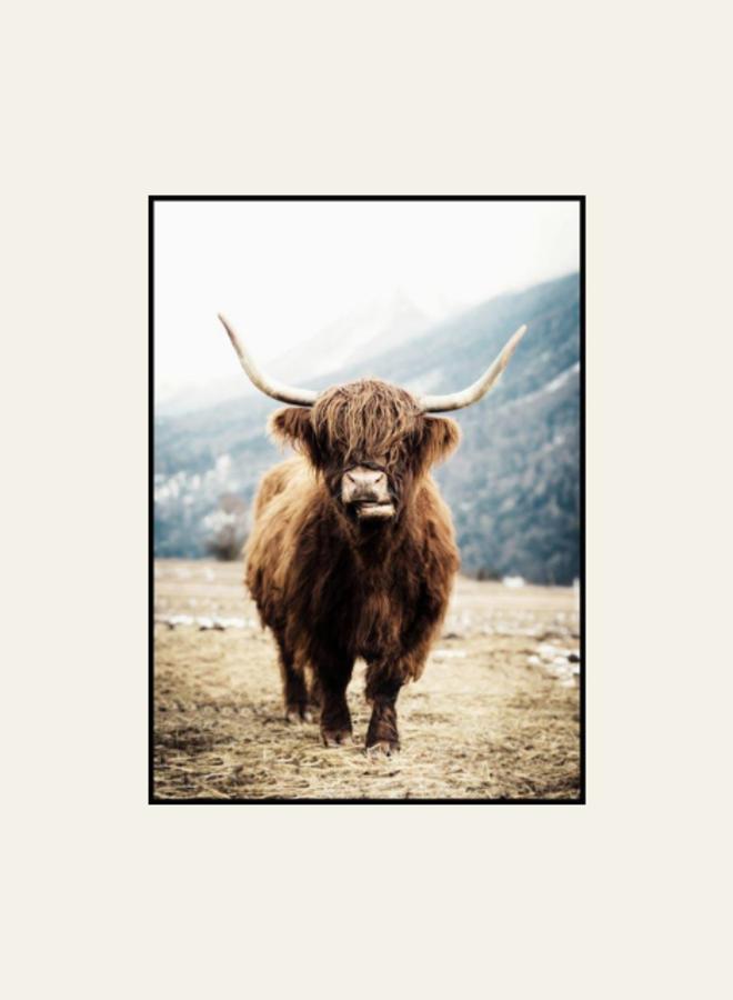 Posterstore Schotse Hooglander