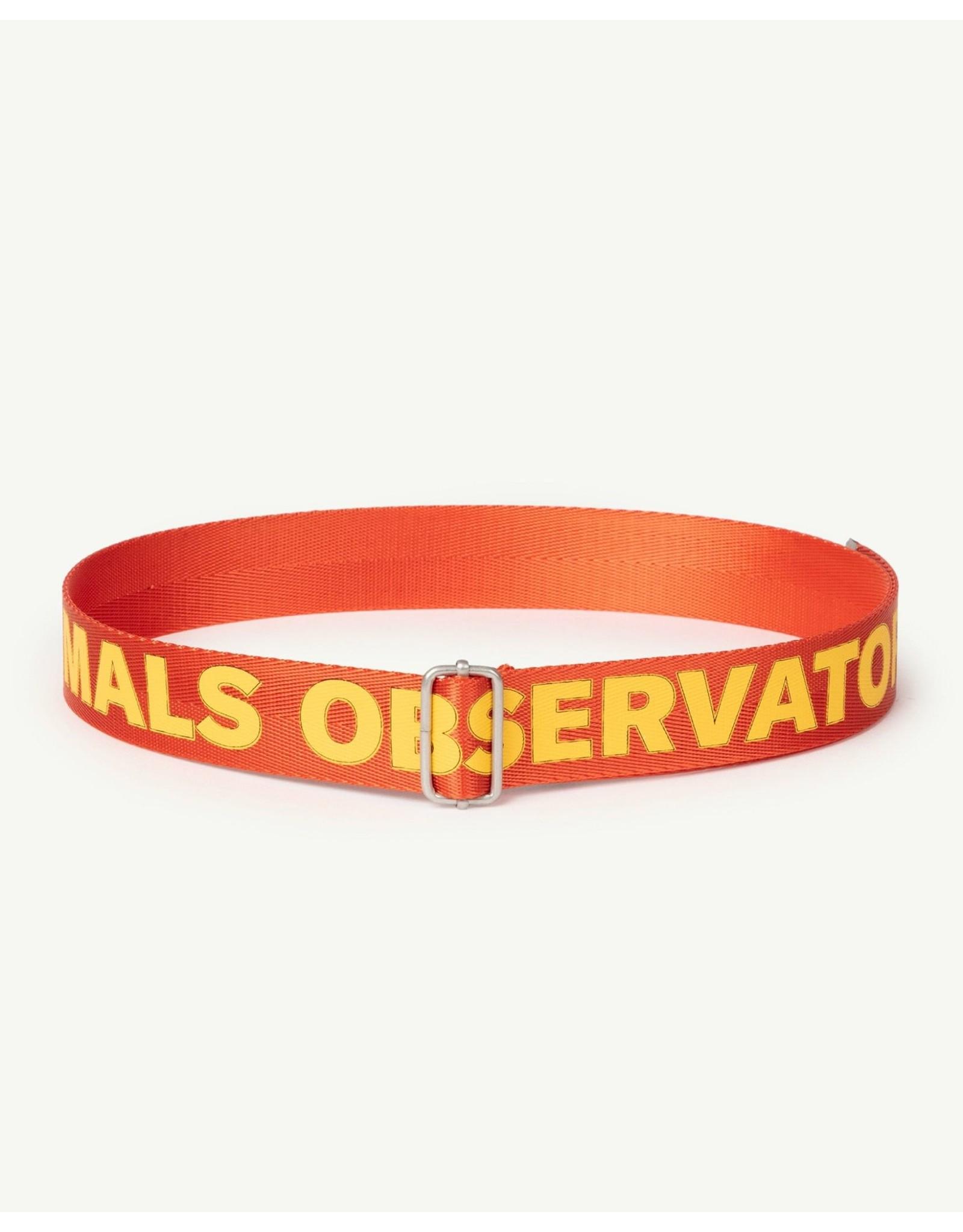 The Animal Observatory TAO PS21 021038CG Lizard Kids belt red