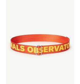 The Animals Observatory TAO PS21 021038CG Lizard Kids belt red