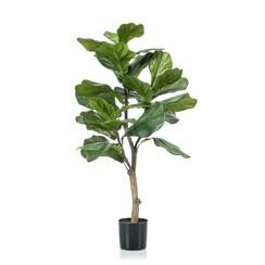 Vioolbladplant 90 cm