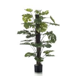 Gatenplant op paal 120 cm