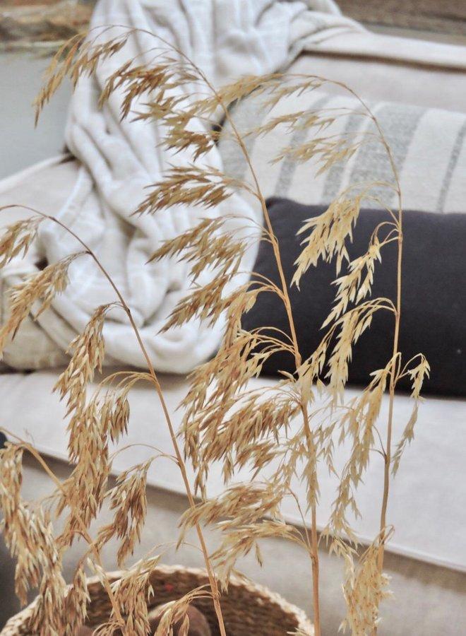 Gedroogde Ampelodesmos Naturel - 110 cm - per 5 takjes