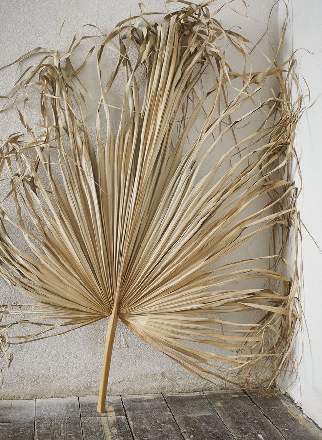 Palmblad 80 cm