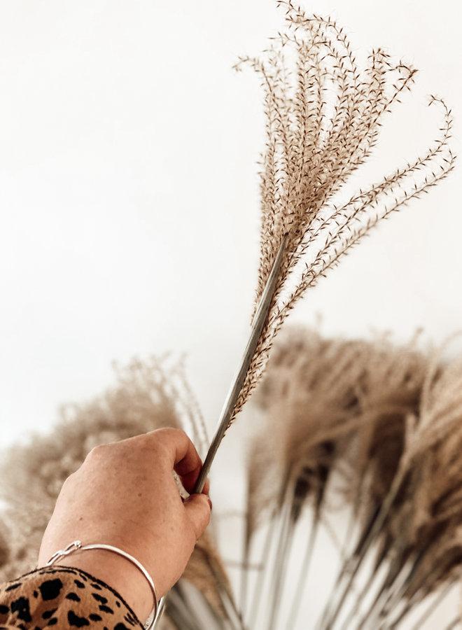 Stipa Feather Naturel - per takje - 65 cm