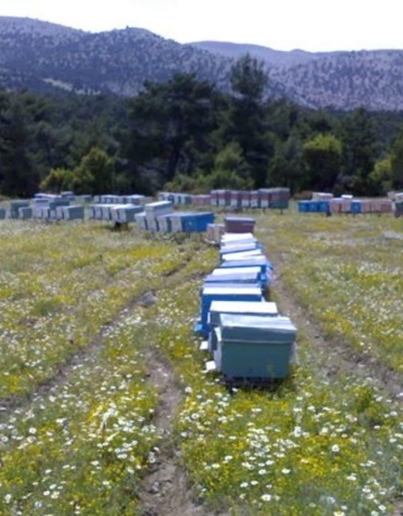 Köyceğiz Balı Köyceğiz Çiçek Balı 450g