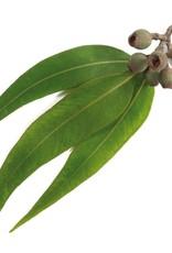 TALYA Talya Eucalyptus olie 20 ml