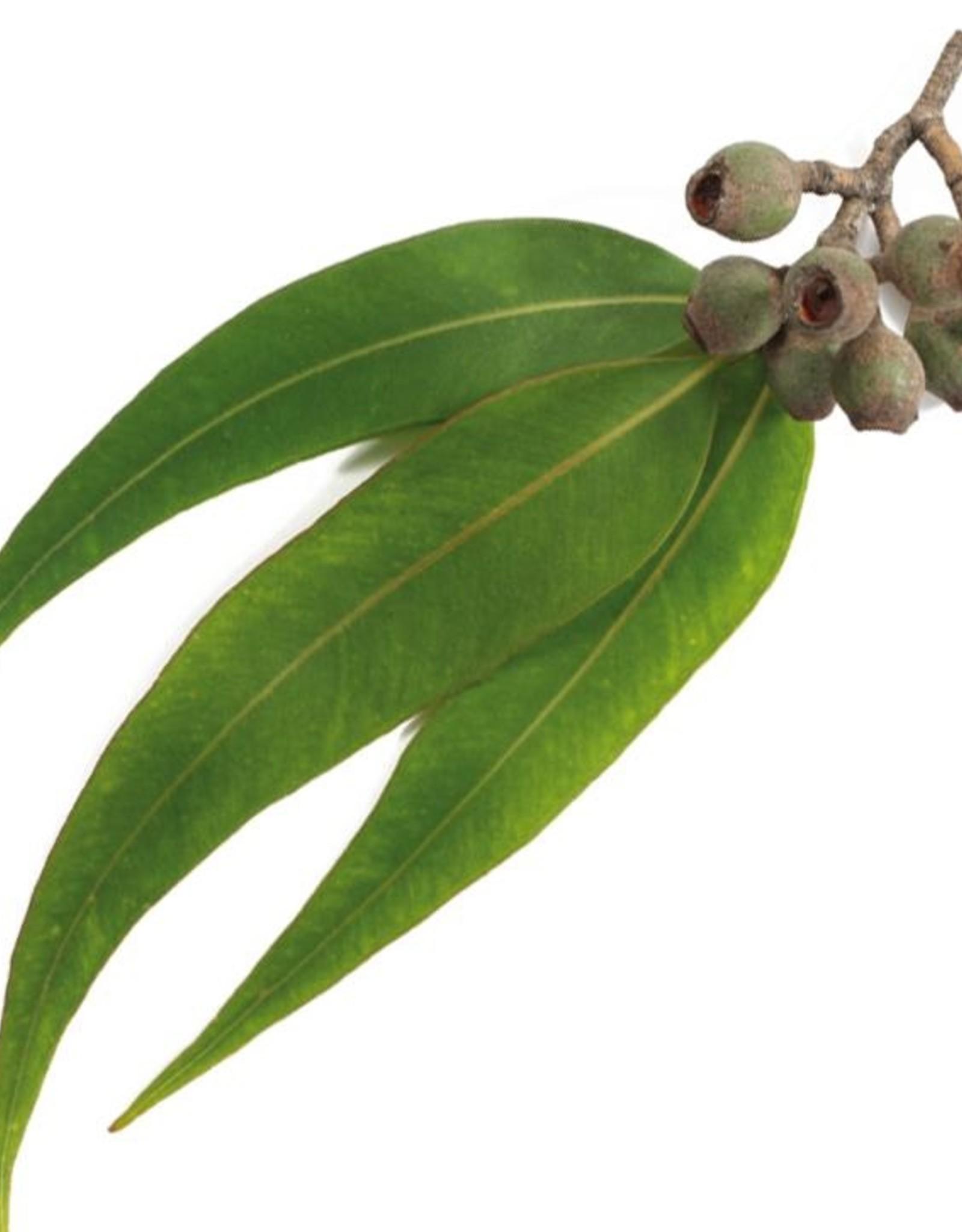 TALYA Talya Eucalyptus olie Essentiële Olie 20 ml