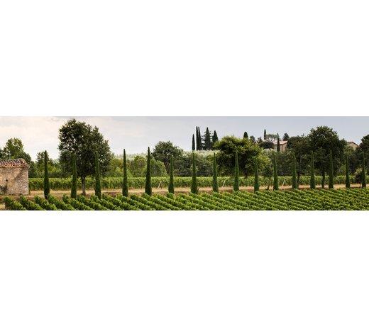 Sette Ponti / Toskana, Castiglion Fibocchi