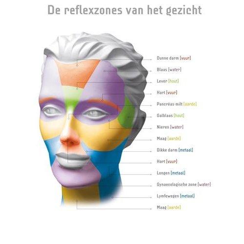 Phyto5 Poster Reflexzones Gezicht