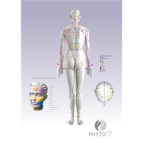 Phyto5 Poster Meridianen Rug