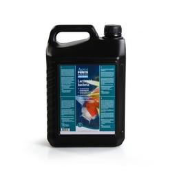 AquaForte Melkzuurbacteriën 5 Liter