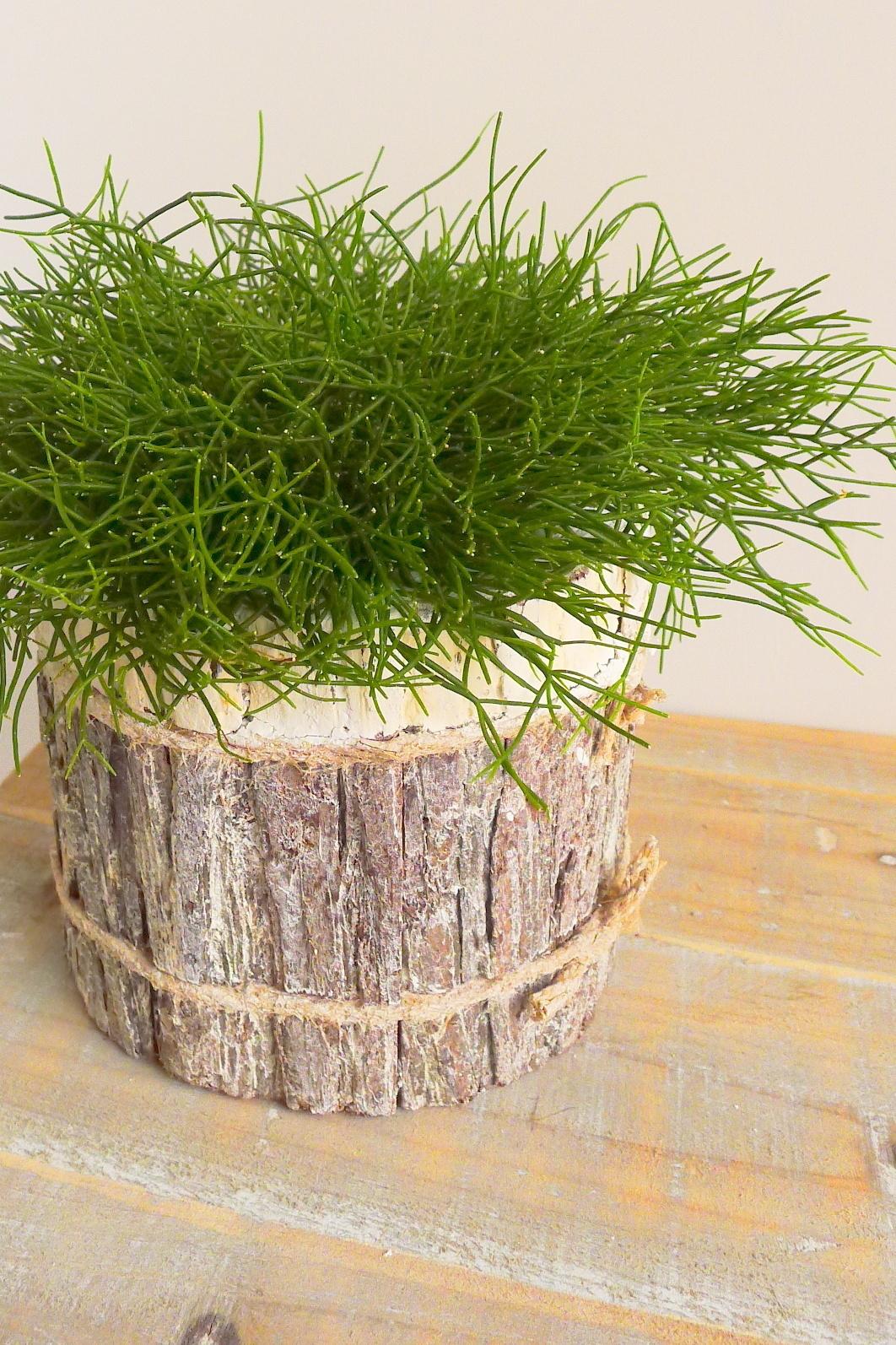 pot bark cyl white 17-2