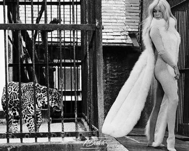 Panther in cage