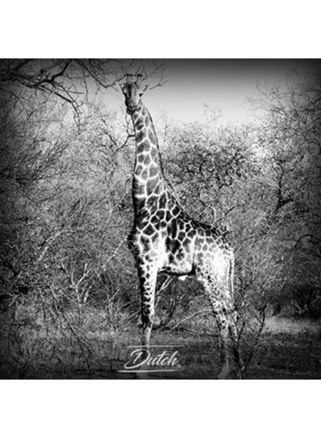 Out of Africa - Giraffe