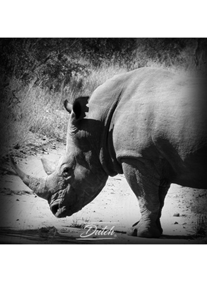 Out of Africa - Rhino