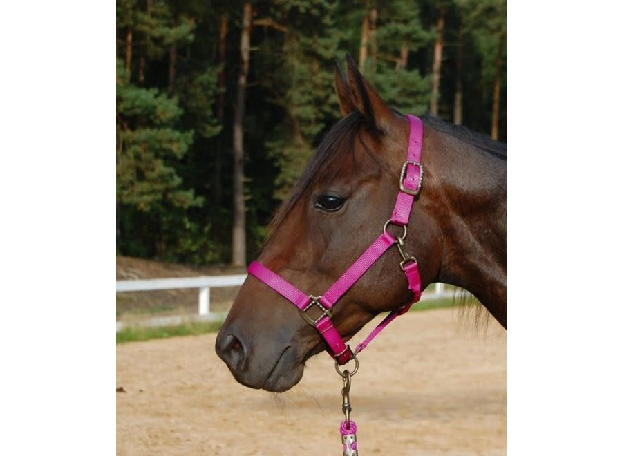 Halster Loony Neon Pink Full