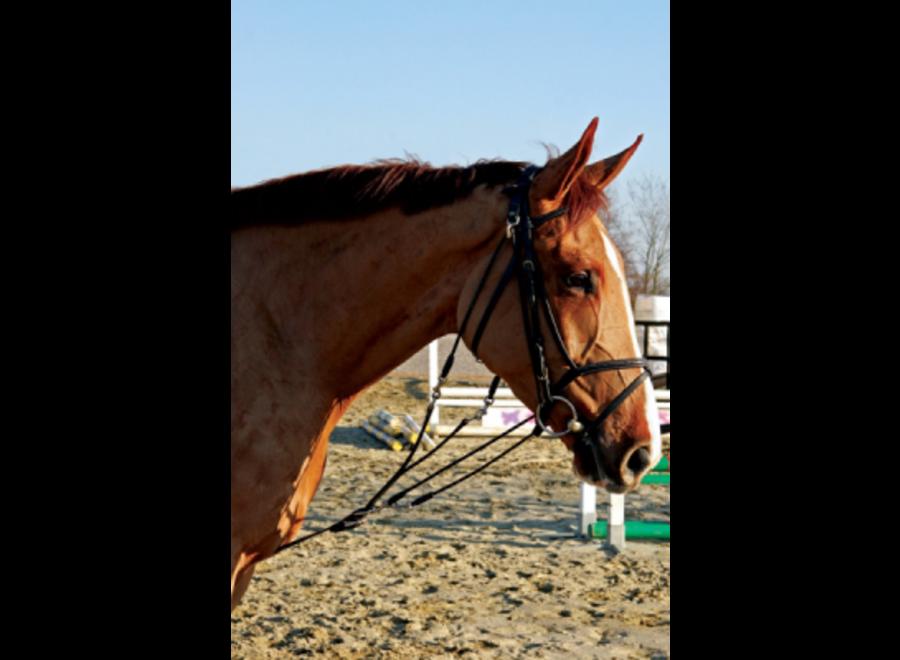 Gogue choco Pony