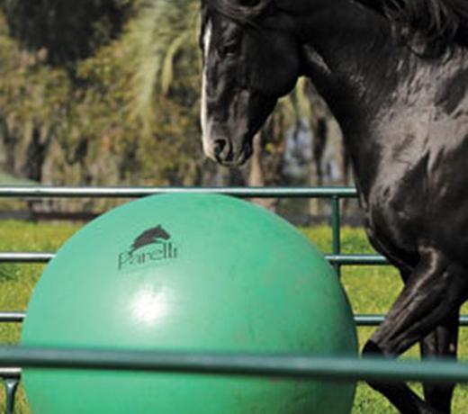 Speelgoed voor paarden