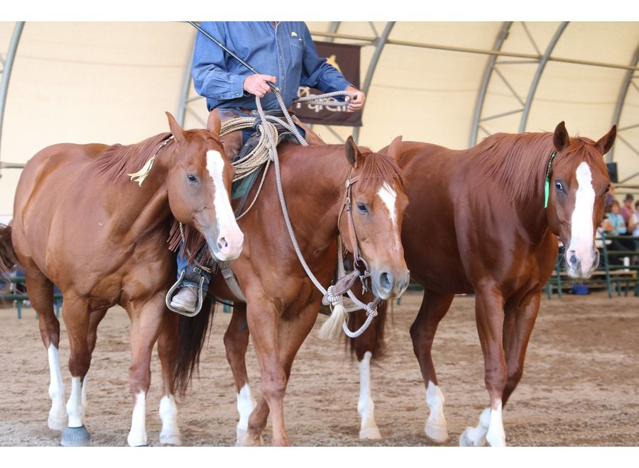 Pat Parelli Masterclass & Cow Camp Belgium 2020 rider