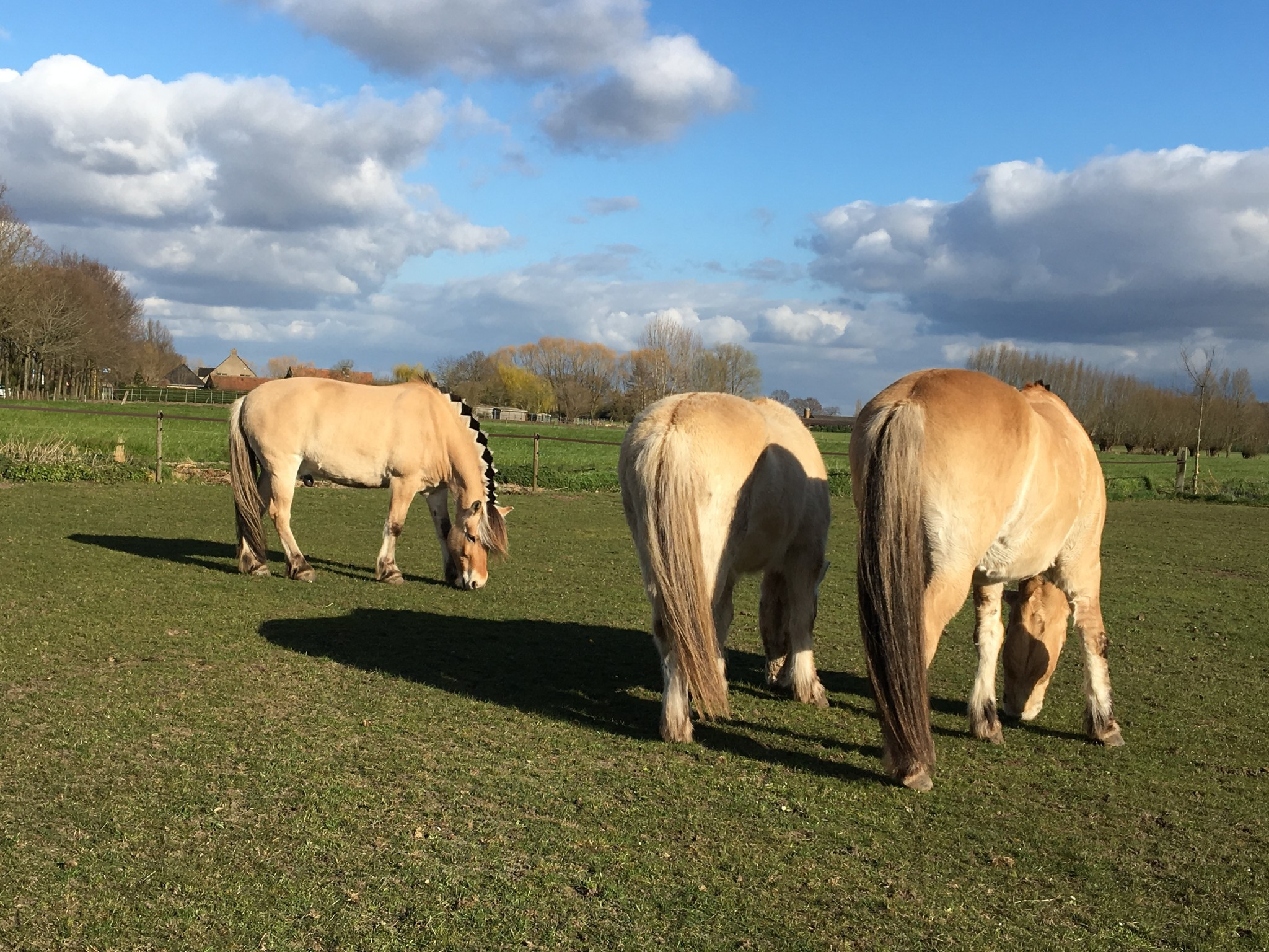 paardenweide