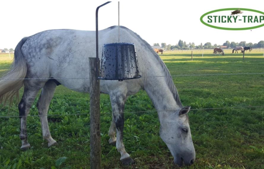 Ecofriendly dazenval: de goedkoopste manier om je paard te verlossen van dazen!