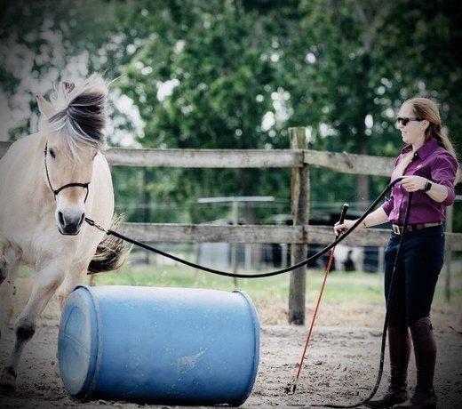 Horsemanship & Grondwerk