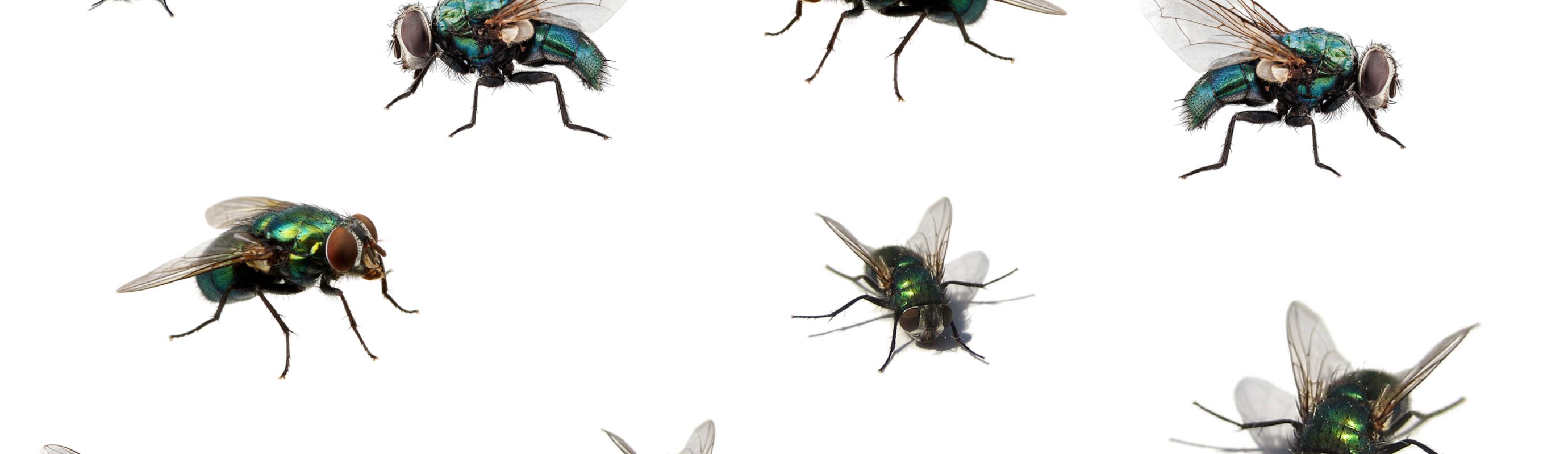 Last van vliegen op stal, op de wei of in huis? Wij hebben dé oplossing voor jou!