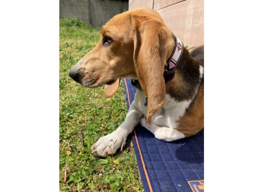 Hondenhalsband Pearl Havana / Roze