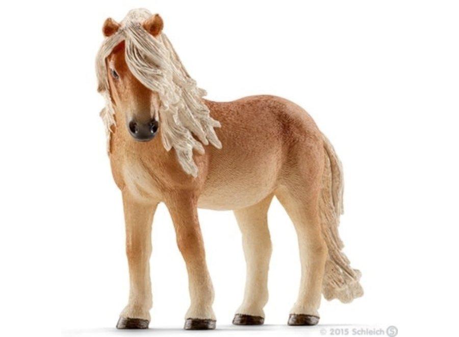 Ijslander pony merrie
