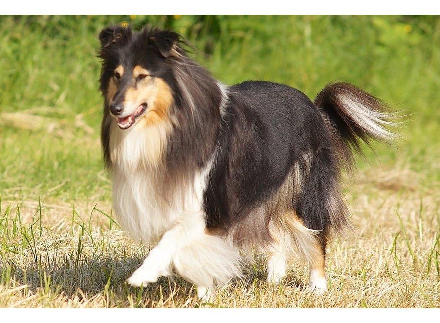 Combi Coat Dog 300ml
