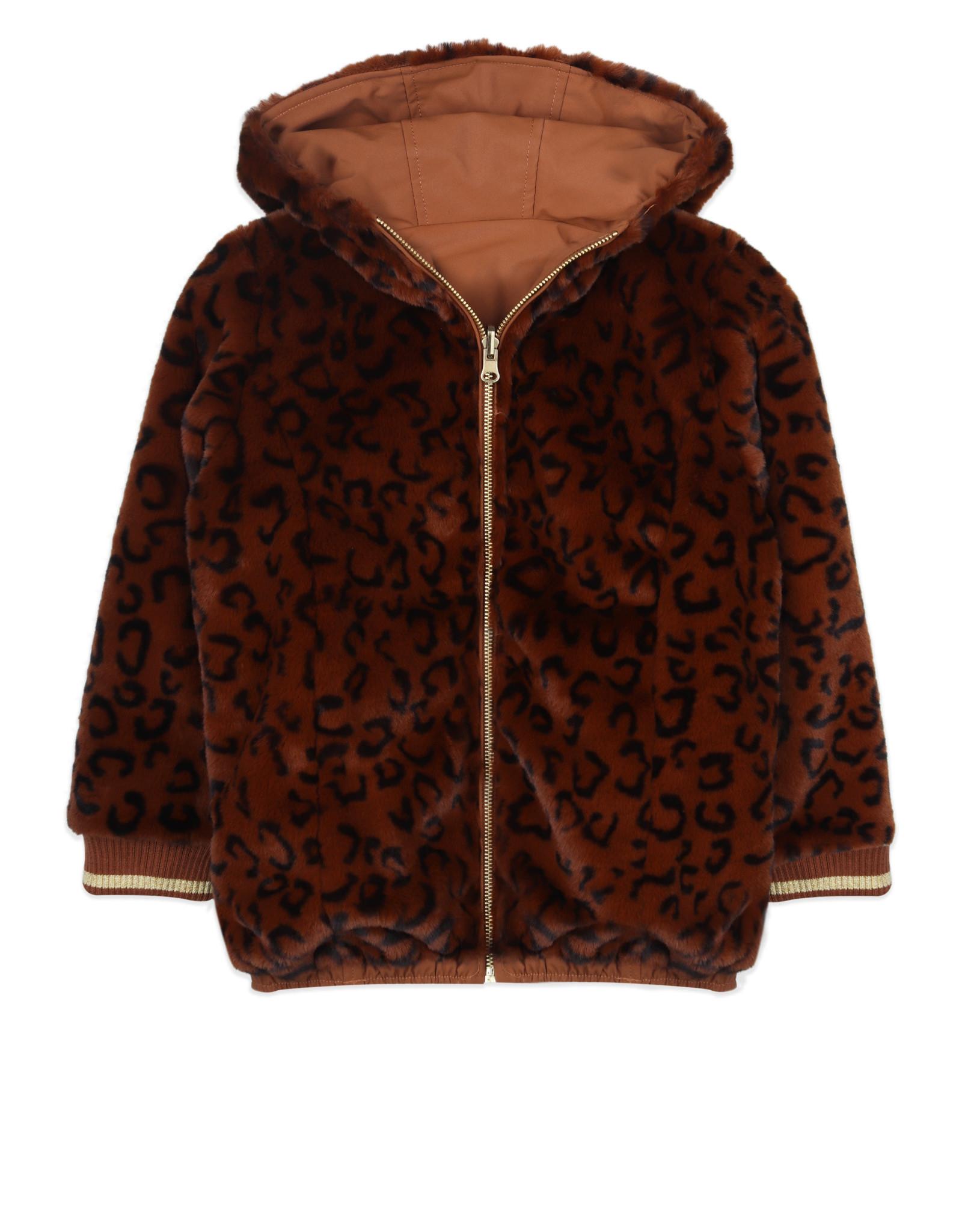Ammehoela Jas Lola brown-leopard
