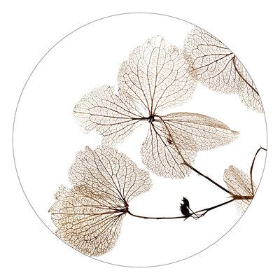 Zoedt zoedt muurcirkel 20 cm  gedroogde bladen