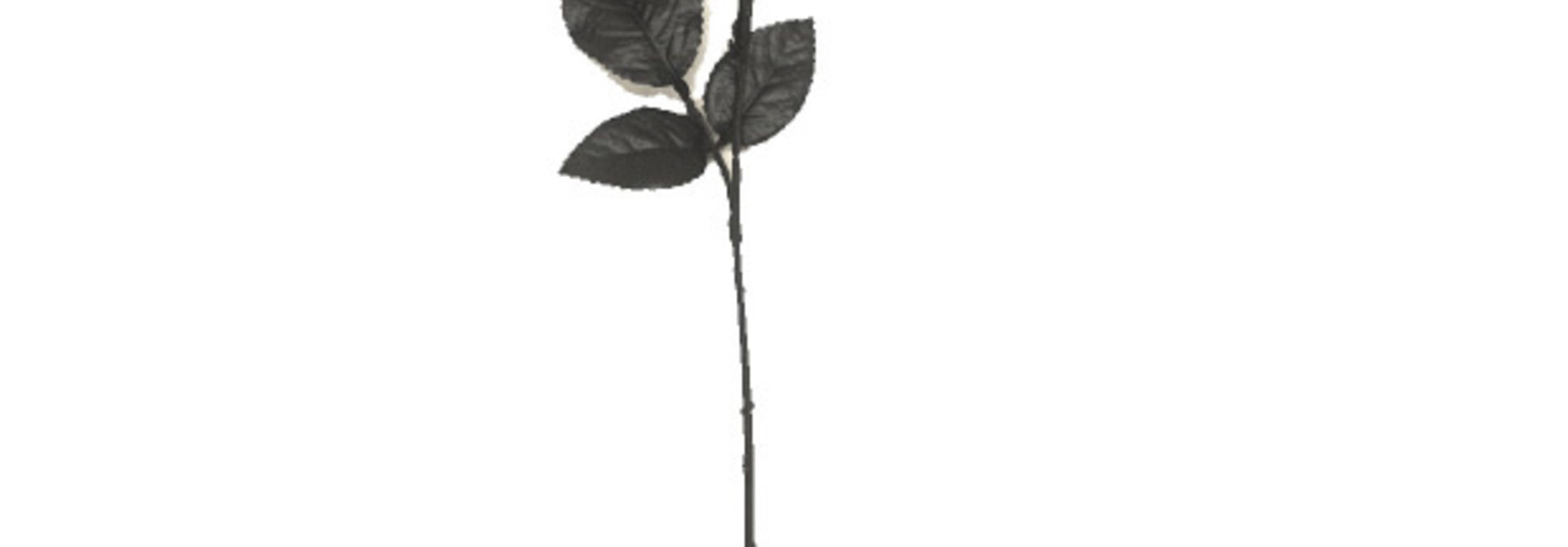 Black Rose creep it real
