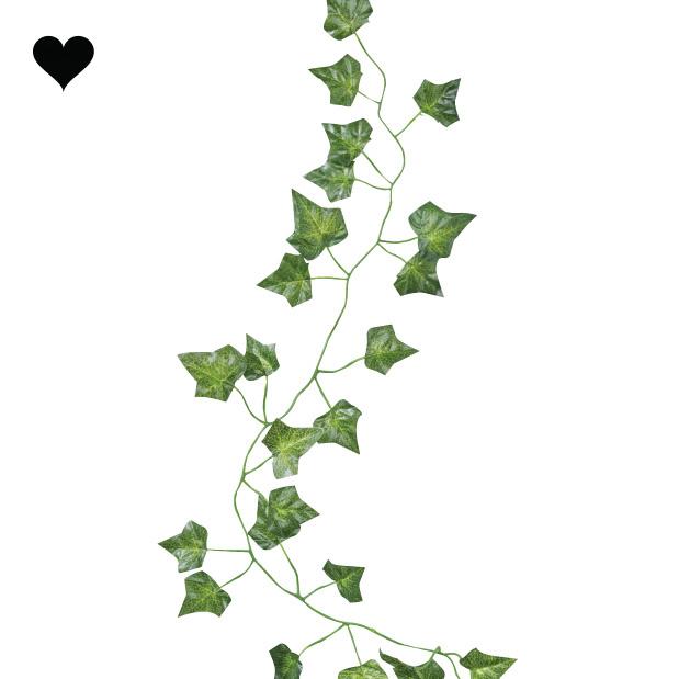 Decoratieve klimop 2m (5 st) Beautiful Botanics Ginger Ray-1