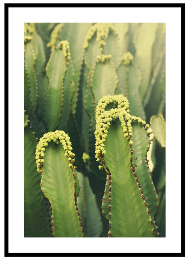 Cactus Close Up Poster