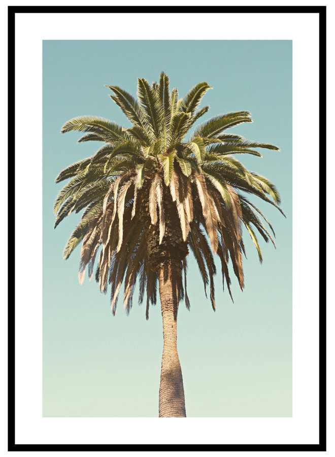 Palm Boom Poster