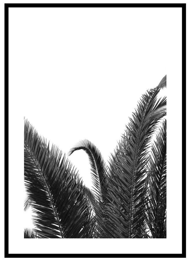 Palm Blad Zwart Wit Poster