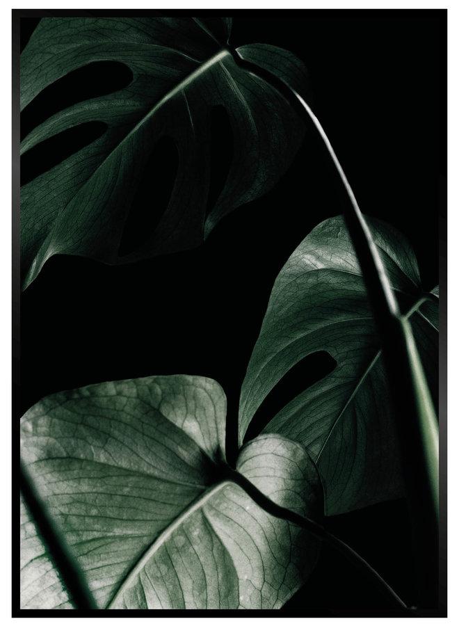 Monstera Black Poster