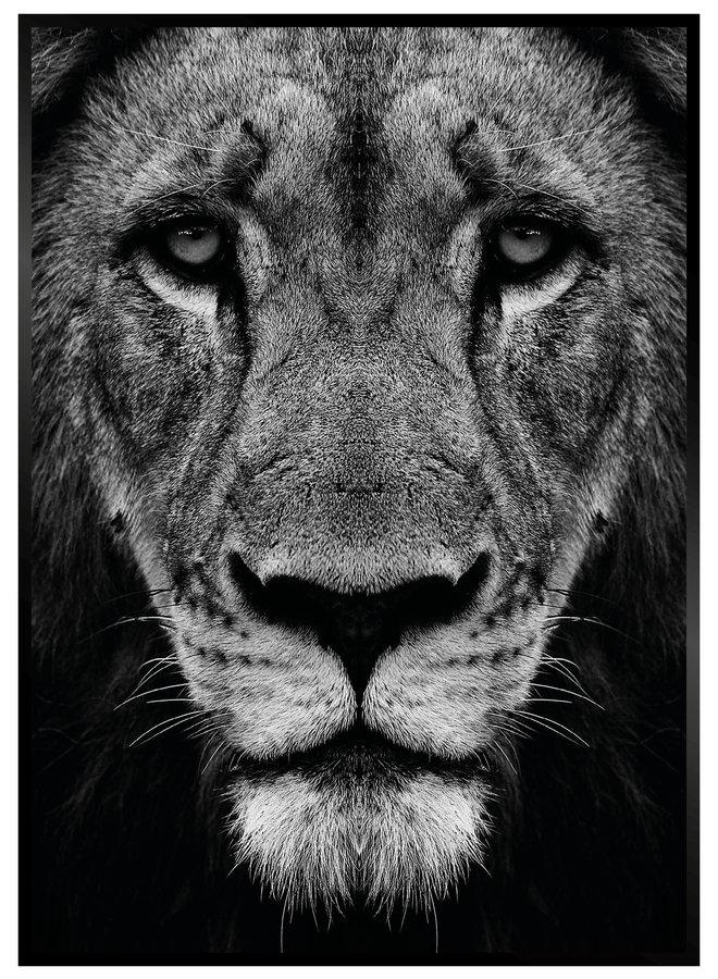 Black Lion II Poster