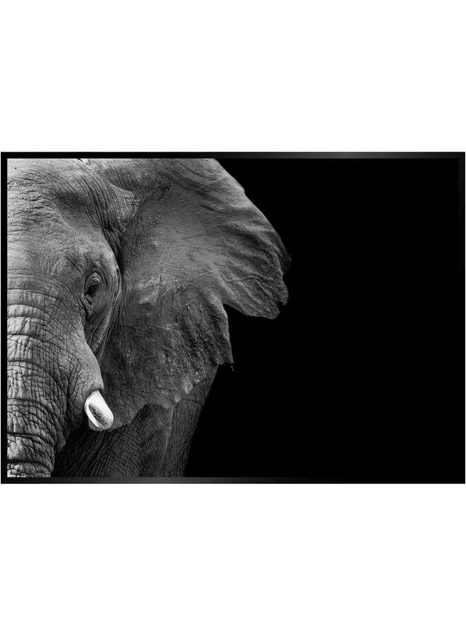Black Elephant Close Up Poster