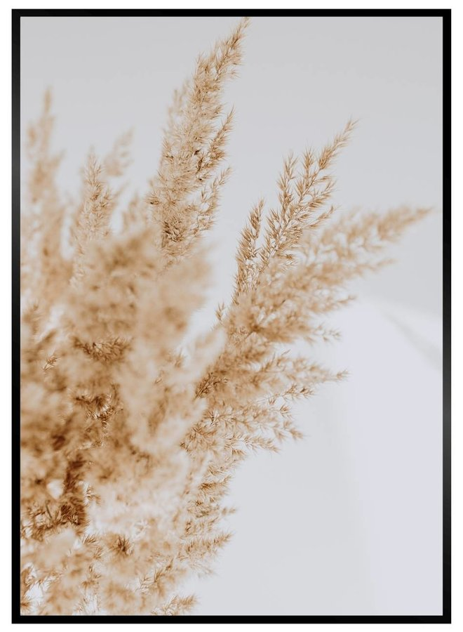 Pampus Grass Poster II