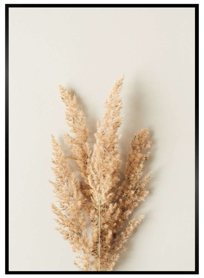 Pampus Grass Leaf Poster