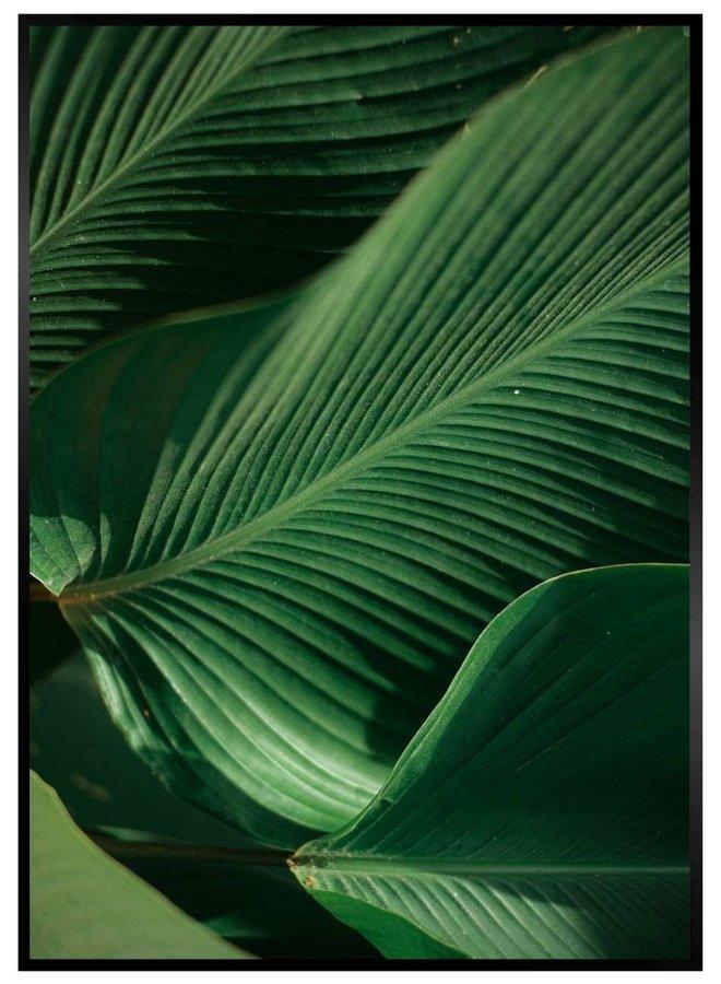 Bananenblad Bladeren Poster