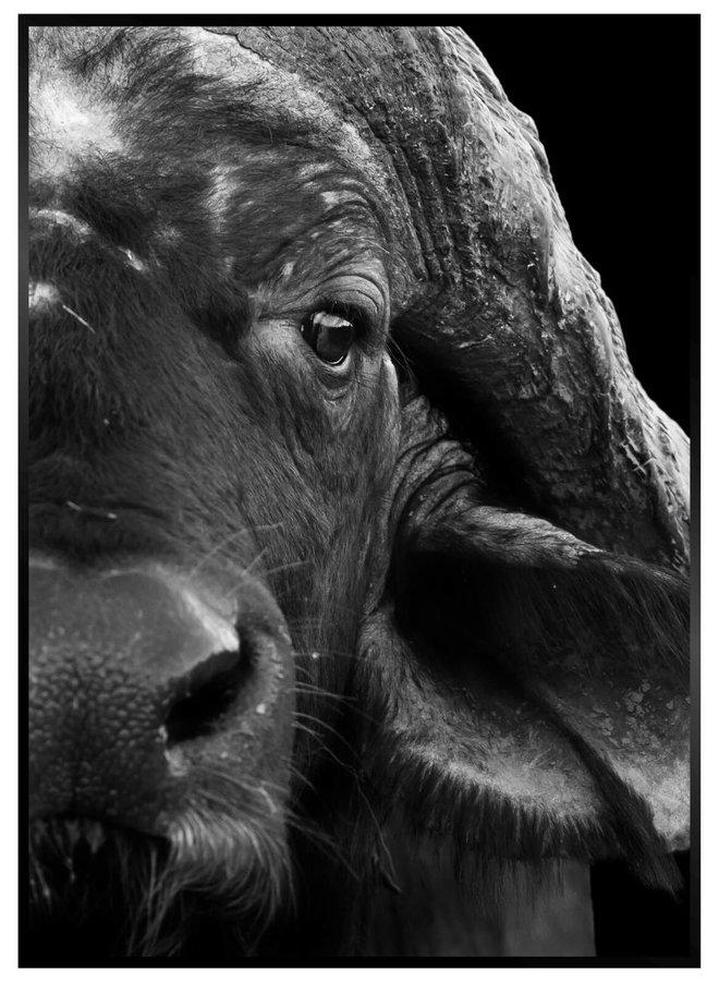 Buffel Zwart Poster