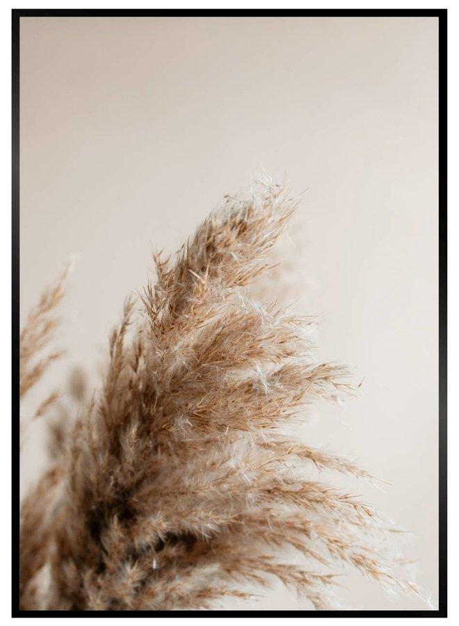 Pampus Grass Poster