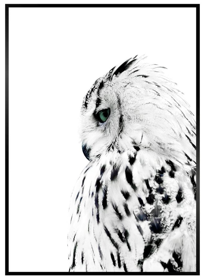 Witte Uil Poster