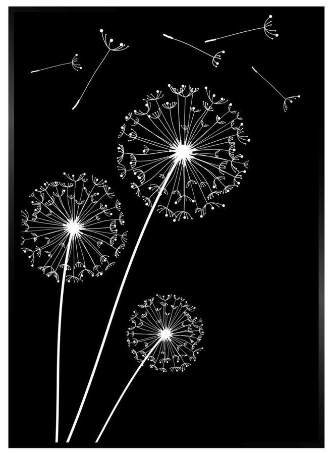 Dandelion Poster Zwart