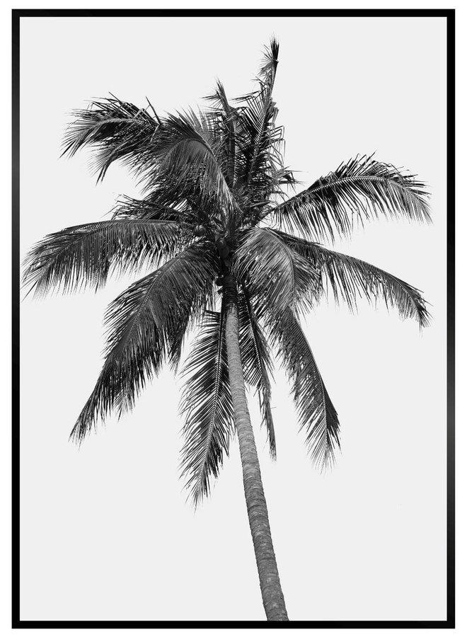 Palm Boom Zwart Wit Poster