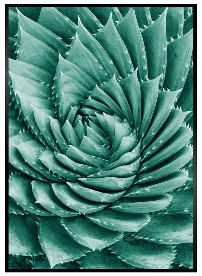 Cactus Close Up Poster IV